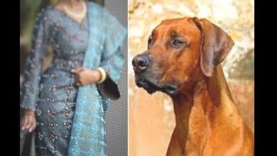 Photo de « Mon mari me droguait pour que son chien couche avec moi », une femme raconte comment elle a perdu son utérus