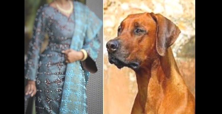 married-dog