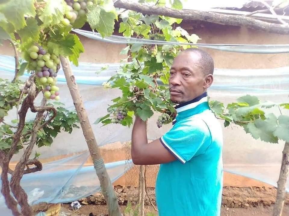 Question Africaine 32: Bourgeon de viticulture à Oumé. Abidjan va-t-il flairer à temps le potentiel de l'or rouge ?