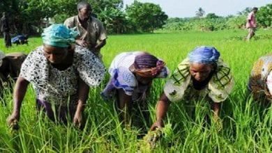 Photo de Afrique: 4 pays sur le point de consacrer 10 % de leur budget au secteur agricole