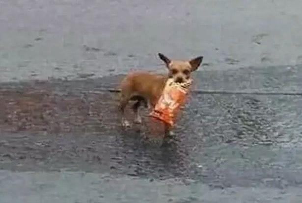 Coronavirus : un homme en auto-isolement envoie son chien lui faire une course (photos)