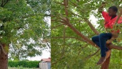 Photo de Côte d'ivoire/Coronavirus: ruée sur les feuilles de Neem qui contiendraient de la chloroquine