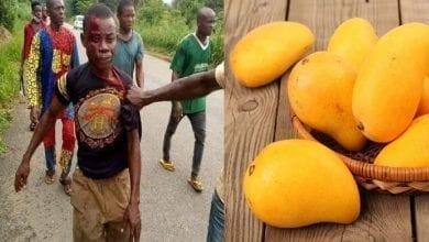Photo de Nigeria: pour des mangues, un homme tue son cousin