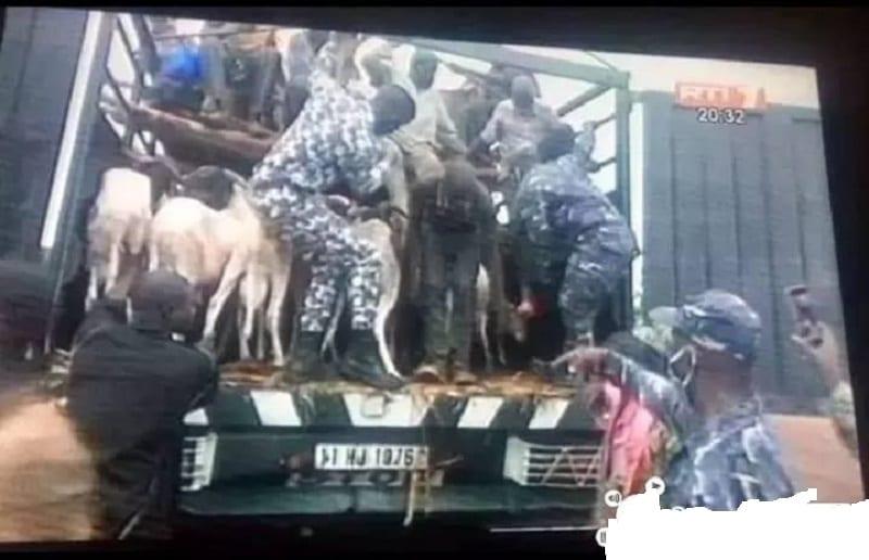 Côte d'Ivoire : les voyageurs clandestins interceptés dans un camion de bétail à Bouaké rapatriés