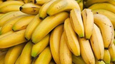 Photo de Santé : Ne consommez jamais les bananes avec ces aliments…