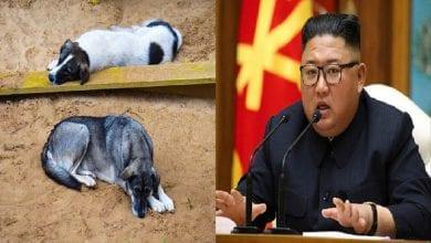 Photo de Corée du Nord : Kim Jong-Un ordonne aux populations de donner leurs chiens pour qu'ils soient mangés