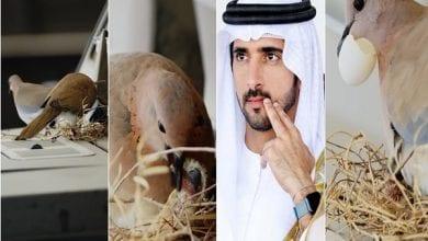 Photo de Dubaï : le prince héritier laisse sa voiture de luxe pour que les oiseaux puissent y construire leurs nids (Vidéo)