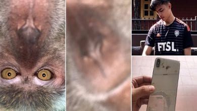 Photo de Malaisie : un singe vole un téléphone et se fait des selfies