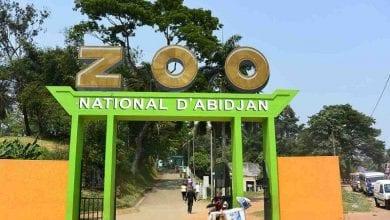 Photo de Côte d'Ivoire : un employé de Zoo licencié pour avoir dénoncé des anomalies