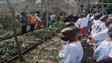Photo de JNCC 2020: Des enfants instruits sur la culture du cacao