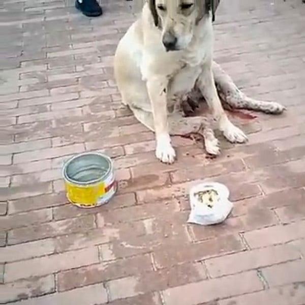 Une chienne violée par un groupe d'hommes et poignardée 30 fois
