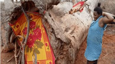 Photo de Kenya: abandonnée par le père de ses enfants, elle trouve refuge dans un arbre (photos)