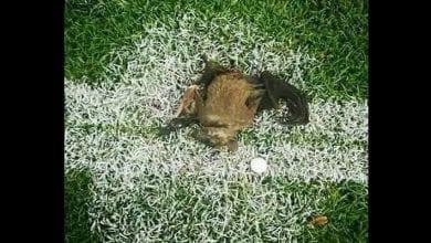 Photo de CHAN 2021: une chauve-souris morte tombe sur l'aire de jeu, la thèse de la sorcellerie évoquée