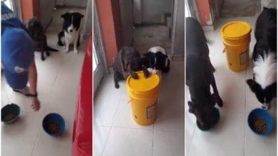 Photo de La vidéo de deux chiens en train de prier avant de prendre leur repas fait le buzz (vidéo)